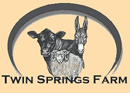 Twin Springs Farm - Black Angus Cattle, cows, calves, cattle, Shetland Sheep, sheep, Mammoth Jackstock, mules, donkeys, rams